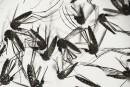 Zika: un premier pays africain contaminé