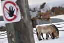 Tchernobyl devenu réserve inédite d'animaux sauvages