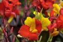 Des fleurs encore plus exceptionnelles! (bis)