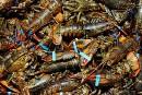 Les homardiers prennent la mer plein d'espoir