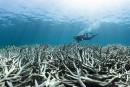 Le blanchissement des coraux se poursuit en Nouvelle-Calédonie