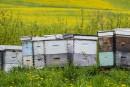 Le vol des ruches fait mal àMiel Labonté