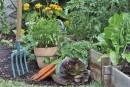 Confusion autour des légumes: tirons les choses au clair!
