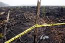 L'Indonésie s'attaque à l'huile de palme