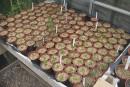 Partir la saison de jardinage du bon pied