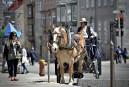 Calèches interdites à Montréal: les cochers de Québec se réjouissent