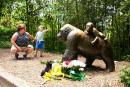 Gorille abattu dans un zoo: la police ouvre une enquête