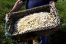 L'art du parfum à Grasse: des savoir-faire transmis depuis trois siècles