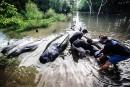 Indonésie: 32 baleines s'échouent sur une plage de Java