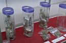 Des dizaines d'abonnés pour le dispensaire de cannabis de Saint-Roch