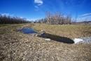 Ottawa va freiner un projet immobilier pour protéger une espèce menacée