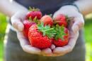 Québec accueillera les Olympiades de la fraise