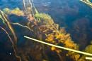 Des lacs en guerre contre une «plante zombie»
