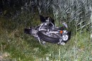 Accident sur la 20: un motocycliste décédé et un automobiliste arrêté