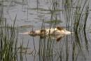 Poissions morts dans la rivière Yamaska: la négligence en cause