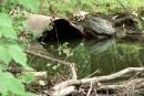 La Ville a identifié la mystérieuse substance du ruisseau Lyon
