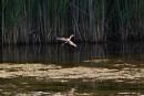 Espèce d'oiseau menacée: le Technoparc retarde des travaux de construction