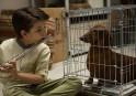 Wiener-Dog: vie de chien ***