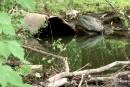 Ruisseau Lyon:un avis de non conformité à l'entreprise fautive