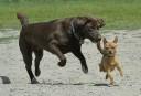 Des attaques de chiens qui sensibilisent