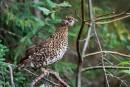 Ornithologie: pour le plaisir... et pour la science