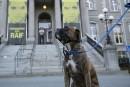 Pour un tribunal pour les chiens