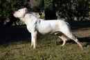 Un homme de Val-des-Monts abat le chien de son voisin