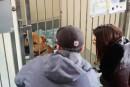 La soeur d'une victime de pitbull dénonce le «chantage» de la SPCA