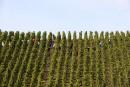 Nouvelles plantations: les vins du sud mieux servis