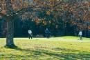 Un automne assez doux au Québec, prévoitMétéoMédia