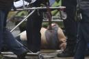 Attentats à New York: le FBI avait enquêté sur le suspecten 2014