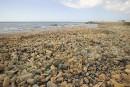 Les Libanais fuient leurs plages polluées