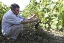 La production mondiale de vin 2016 parmi les plus basses