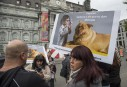Montréal adopte son règlement sur les pitbulls