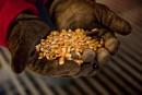 Les Canadiens veulent l'étiquetage des aliments OGM