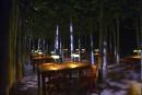 Une nuit dans la forêt des mots