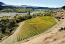 Le vin bio autour du monde