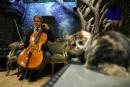 Pour calmer vos matous, un violoncelliste leur crée un album