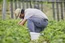 Salaire minimum à 15$: des conséquences en agriculture