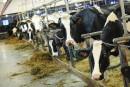 Libre-échange: lePQ et la CAQ exigent des compensations pour les producteurs laitiers et fromagers