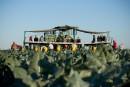 Des travailleurs guatémaltèques floués par une firme de placement