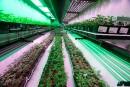 La légalisation du cannabis inquiète les Canadiens