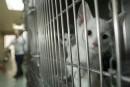 Les euthanasiesd'animaux en forte baisse