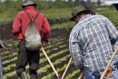 Guatémaltèques floués: les 15 travailleurs ont été libérés