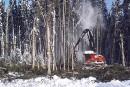 Chantier de la Romaine: la forêt gaspillée