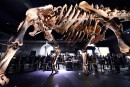 Astéroïde qui a décimé les dinosaures: la Terre a réagi comme un fluide