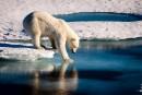 FILES-ARCTIC-POLAR-BEAR-ENVIRONMENT-CLIMATE-CHANGE