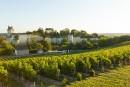 Val-de-Loire: la belle fin d'été sauve le millésime