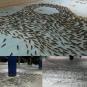 Certains poissons ont été placés pour former des bancs, d'autres... | 28 novembre 2016