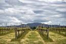 Les viticulteurs australiens redoutent les changements climatiques